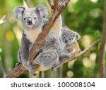 australian koala bear with her... | Shutterstock . vector #100008104