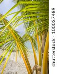 behind a palm at a tropical... | Shutterstock . vector #100037489