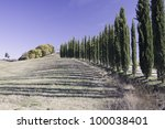 Cypress alley in Tuscany. - stock photo