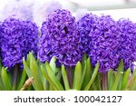 A Group Of Hyacinth Flowers In...