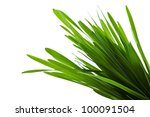 green grass isolated on a white ... | Shutterstock . vector #100091504