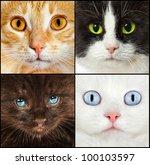 Portrait Of A Cats Close Up