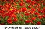Orange Flowers In A Flower Field