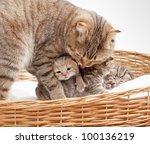 Stock photo adorable small kitten in wicker basket 100136219