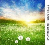 Dandelion Field And Bright...