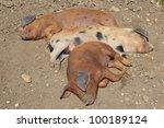 piglets | Shutterstock . vector #100189124