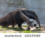 Photo Of A Giant Ant Eater...