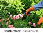 Stock photo gardening 100378841