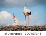 Storks in nest - stock photo