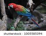 macaw parrot bird in thailand. | Shutterstock . vector #1005585394