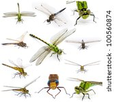 Stock photo dragonfly set on a white background 100560874