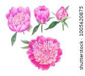 watercolor hand painted pink... | Shutterstock . vector #1005620875