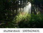 sunrise in the forest with... | Shutterstock . vector #1005624631