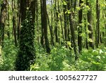 background of nature. sunny day ... | Shutterstock . vector #1005627727