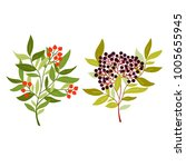 simple botanical illustration... | Shutterstock .eps vector #1005655945
