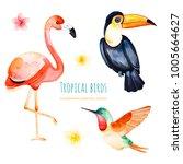 watercolor exotic birds... | Shutterstock . vector #1005664627