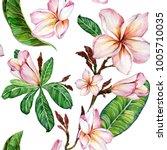 pink plumeria flower on a twig. ... | Shutterstock . vector #1005710035