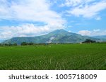 rice field with blue sky | Shutterstock . vector #1005718009