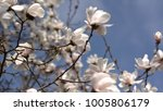 spring arrives on fruit trees | Shutterstock . vector #1005806179
