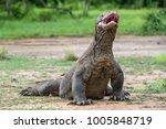 the komodo dragon  varanus...   Shutterstock . vector #1005848719