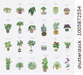 home indoor plants hand drawn... | Shutterstock . vector #1005872554