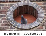 A Lone Pigeon Checking Out The...
