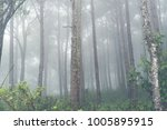 foggy forest in tropical | Shutterstock . vector #1005895915