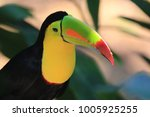 beautiful colorful toucan seen... | Shutterstock . vector #1005925255