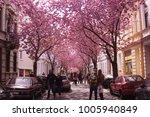 cherry blossom street in bonn ... | Shutterstock . vector #1005940849