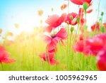 gentle poppies in a field on a...   Shutterstock . vector #1005962965