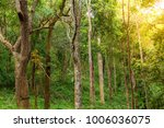 the forest tree with abundance. | Shutterstock . vector #1006036075