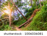 the forest tree with abundance. | Shutterstock . vector #1006036081