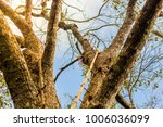 the forest tree with abundance. | Shutterstock . vector #1006036099