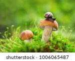 edible mushrooms in a forest on ... | Shutterstock . vector #1006065487