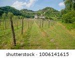 rows of vines in spring | Shutterstock . vector #1006141615