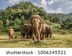 Elephants in chiang mai....
