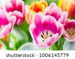 tulip. tulips spring flowers...   Shutterstock . vector #1006145779