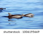dolphins peeking from under the ... | Shutterstock . vector #1006195669