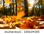 Fallen Leaves In Autumn Forest...