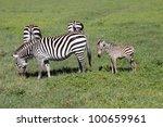 africa  masai mara zebras  | Shutterstock . vector #100659961