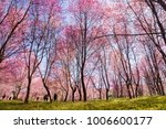 The Field Of Blossoming Pink...