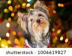 yorkshire terrier dog in a...   Shutterstock . vector #1006619827