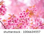 beautiful pink flower wild... | Shutterstock . vector #1006634557