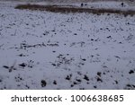 snowy field with silhouettes of ... | Shutterstock . vector #1006638685