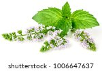 purple peppermint flowers... | Shutterstock . vector #1006647637