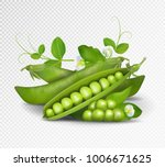 Vector Green Peas. Photo...