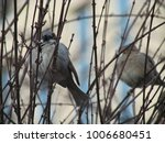 birds in the tree | Shutterstock . vector #1006680451