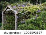 clematis 'rasputin' climbing  | Shutterstock . vector #1006693537