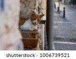 A Cat Is Sitting On A Stone Wall