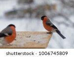 bird bullfinch pecks sunflower... | Shutterstock . vector #1006745809